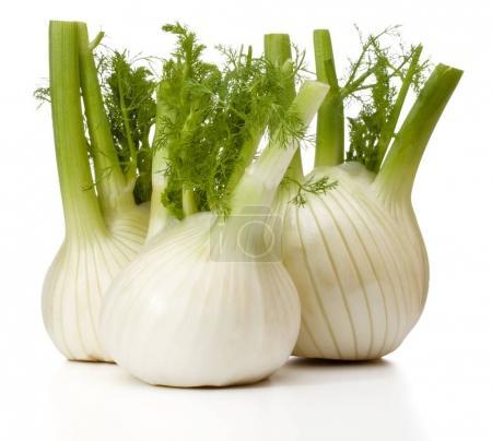 Fresh fennel bulb