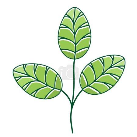Moringa Leaf Over White Background