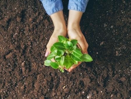 Person holding green sprout.