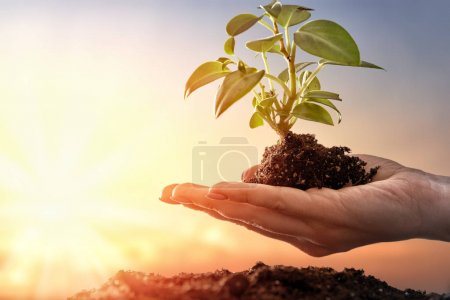 Photo for Concept of earth day. Person is holding in hands green sprout. Spring, nature, eco and care. - Royalty Free Image