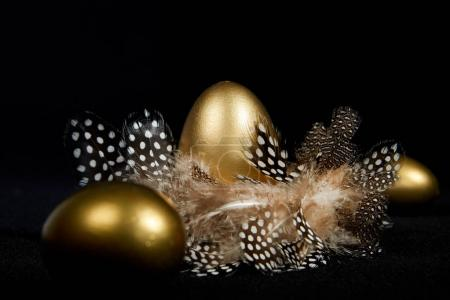 Creatively lit golden goose eggs in a real birds nest black background