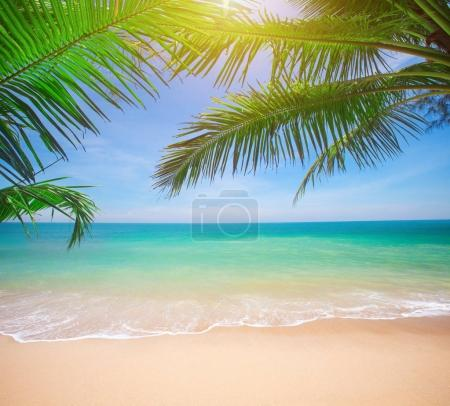 Palms and tropical beach
