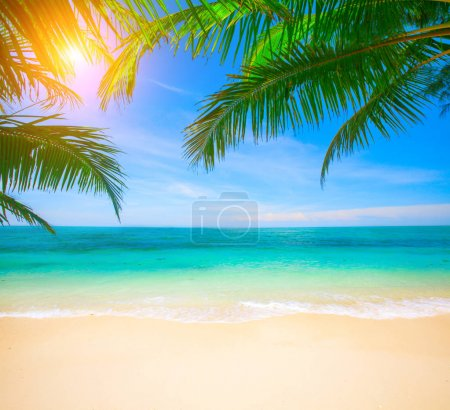 Amazing shot of tropical beach with coconut palm