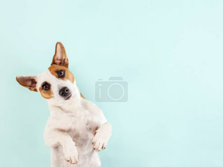 Photo pour Joli chien. Un animal menteur. Espace de copie - image libre de droit