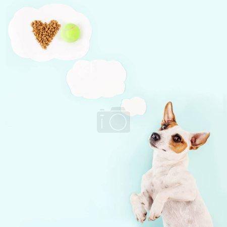 Photo pour Joli chien. Rêve animal sur la nourriture sèche - image libre de droit