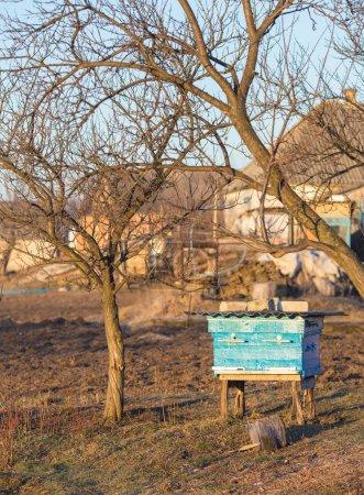 Photo pour Les preuves des abeilles sont dans une clairière dans les bois - image libre de droit