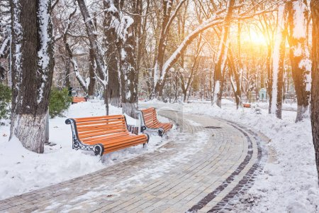 Winter landscape with benches in the alley of park