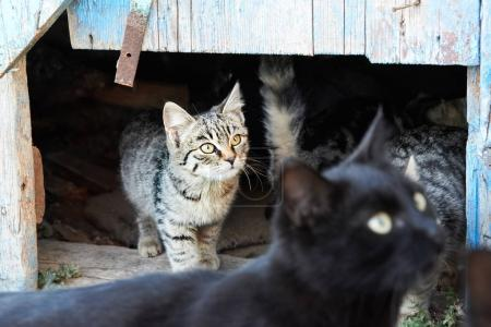 Group of wild cats