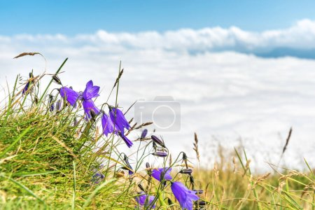 Blue flowers bluebells