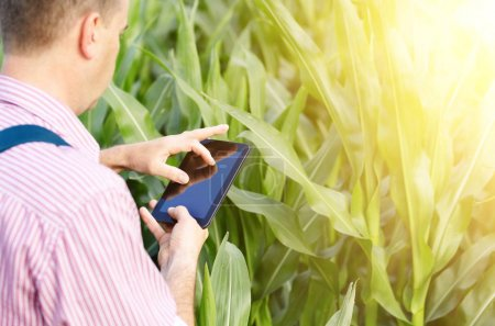 Farmer with tablet computer inspecting corn field in summer sunny day