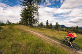 Mountain biker riding MTB in mountains and woods