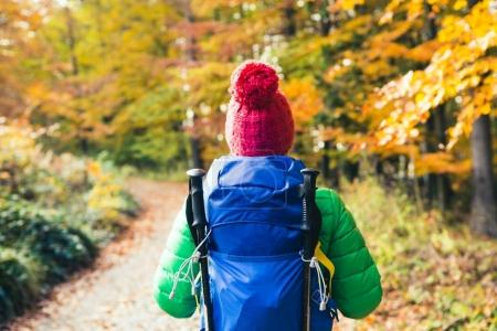 Photo for Hiking woman with backpack looking at inspirational autumn golden woods. Fitness travel and healthy lifestyle outdoors in fall season. Travelling female backpacker, walking and looking around. - Royalty Free Image