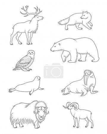 Set of vector Arctic animals in contours