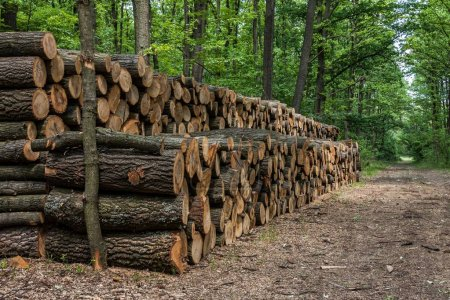 Photo pour Gros tas de bois dans la forêt. - image libre de droit