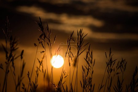 Photo for Grass landscape in the wonderful sunset light. - Royalty Free Image