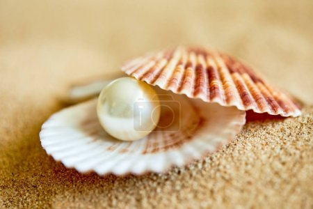 pearl in opened shell on beach