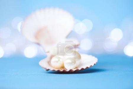 Photo for Pearls in open shell on the blue background - Royalty Free Image
