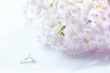 white nice lilac flowers, close-up