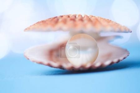 pearls in open shell