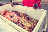 Freshly Caught Tropical Fish and lobsters in a bucket offered by