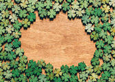 Four-leaf clovers laying on wooden floor, creating a circle. Irish culture. St. Patrick's Day.