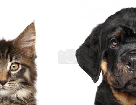 Cat and dog, half of muzzle