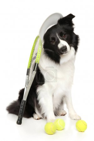 Border Collie with tennis balls and racket