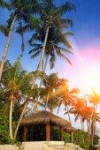 Gazebo under palm trees on the seashore. Maldives.