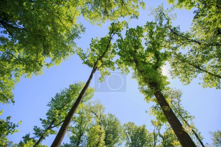 Photo for Beautiful spring nature background, green forest and blue sky - Royalty Free Image