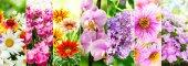 Koláž různých květin