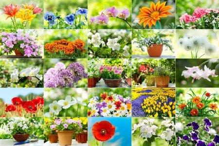 Photo pour Collage de diverses fleurs dans un jardin - image libre de droit