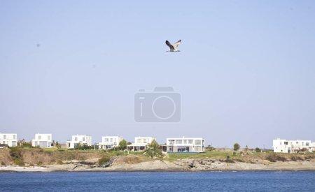 Photo pour Plan panoramique de mouette volant au-dessus de la mer - image libre de droit