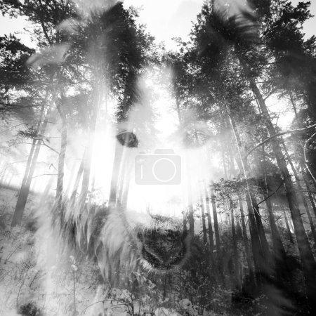 Photo pour Fond de nuit de Halloween avec wolf mystique en forêt fantasmagorique. - image libre de droit