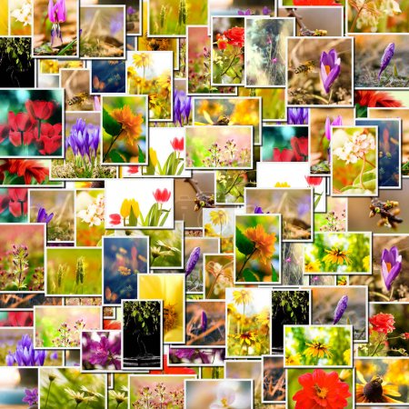 Photo for Flower collage. spring background, floral montage from several images - Royalty Free Image