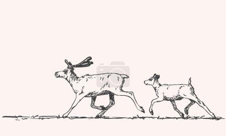hand-drawn sketch of reindeers
