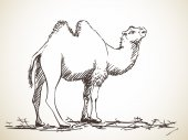 Sketch of two-hump camel
