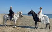 Marrieds és a lovak