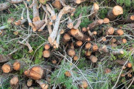 Photo pour Empilement de bois provenant d'ouvrages forestiers - image libre de droit