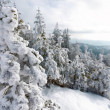 Wonderful winter landscape on mountain with snowy ...