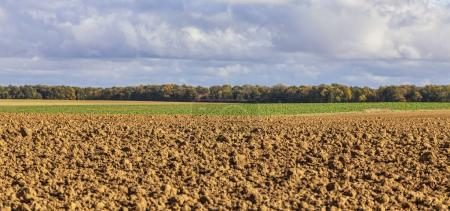 Autumn Landscape in a Field