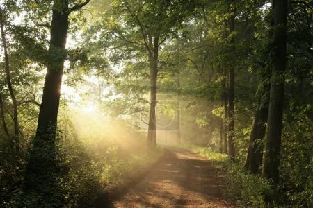 Foto de Camino por un bosque de niebla de primavera. - Imagen libre de derechos