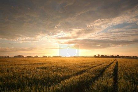 Salida del sol sobre un campo de grano.