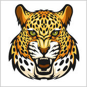 Vector jaguar portrait Jaguars head on white background