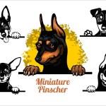 Miniature Pinscher - peeking dogs vector set. Dog ...
