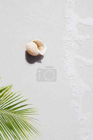 view of  sea  shell on tropical beach  and palm background