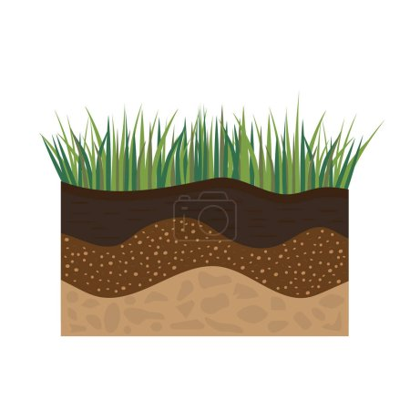 soil profile with grass