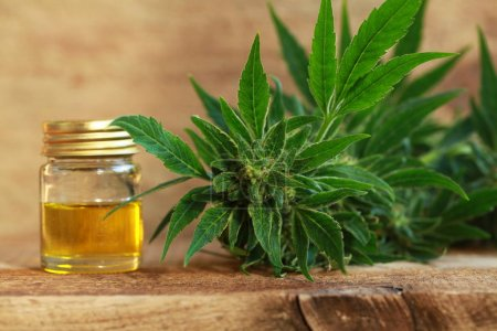 Photo for Cannabis oil and hemp - Royalty Free Image