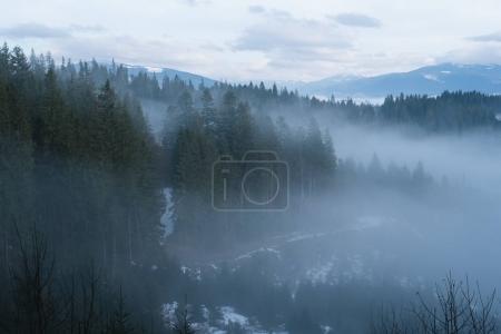 Photo pour Paysage montagneux en hiver. Forêt de sapins et brouillard. Jour nuageux. Ukraine des Carpates, Europe - image libre de droit
