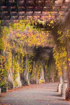 Alley in the garden