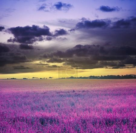 Photo for Evening sunset sky and meadow - Royalty Free Image